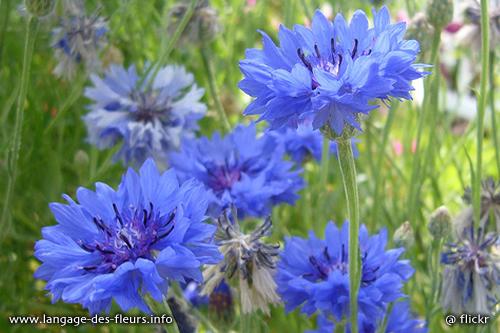 etre fleur bleue… – mes mots douceurs