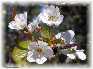 Debut-du-printemps-a24475690
