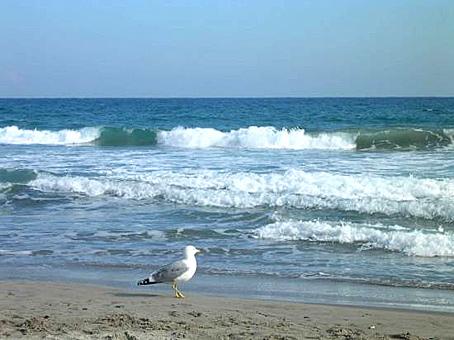 plage-mer-mouette-alassio-f (1)