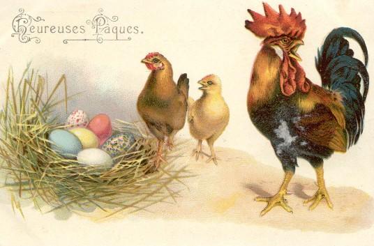image ancienne pâques coq poule