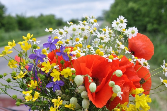 wild-flowers-849401_960_720