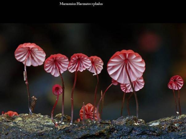 champignons-14
