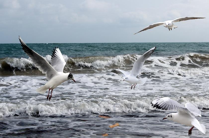 seagulls-712466_960_720
